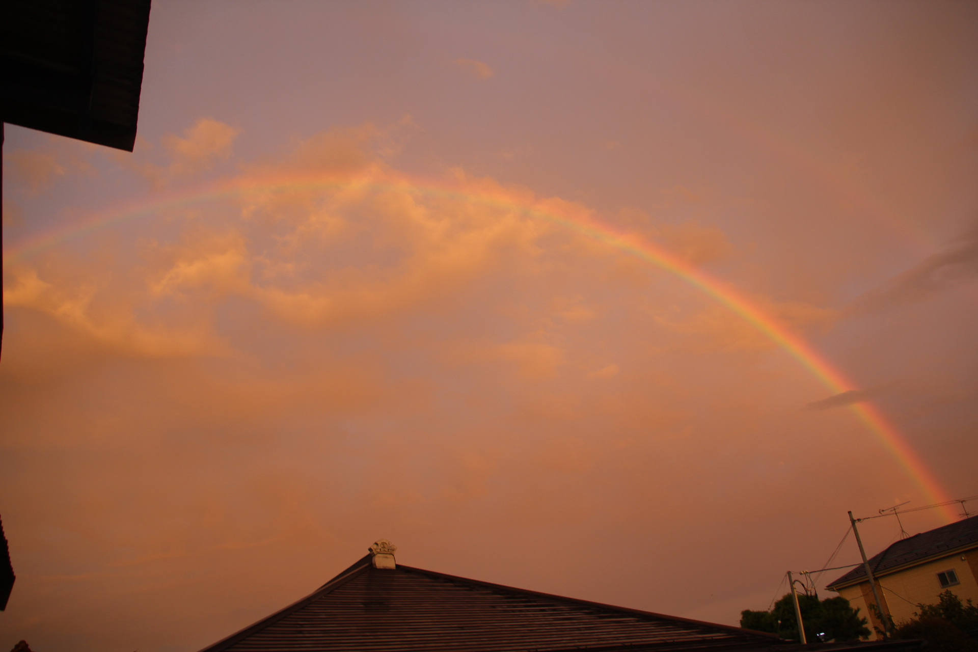 きれいな虹